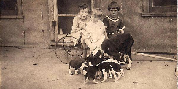 Pets: Our Ancestors' Buddies